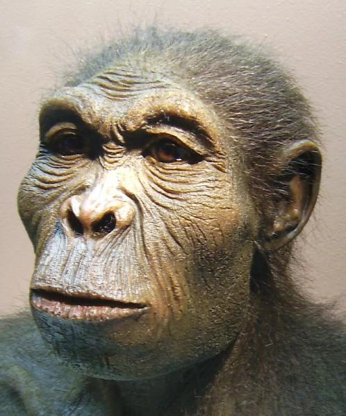 Древние люди могли стать причиной вымирания вида «хоббитов»