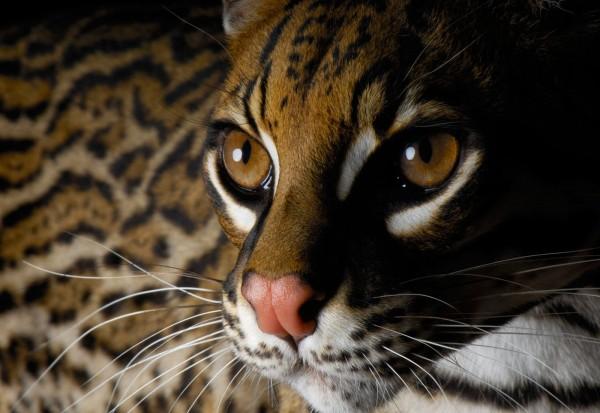 Ученые: Анализ ДНК давних захоронений показал, что кошек на корабли брали еще викинги