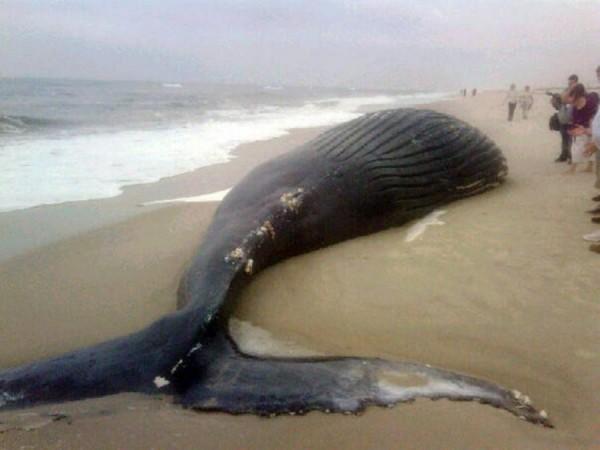Ученые: На побережье Чили выбросились несколько китов