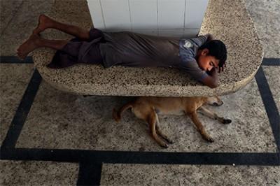 Учёные: Причина дружбы собаки с человеком установлена