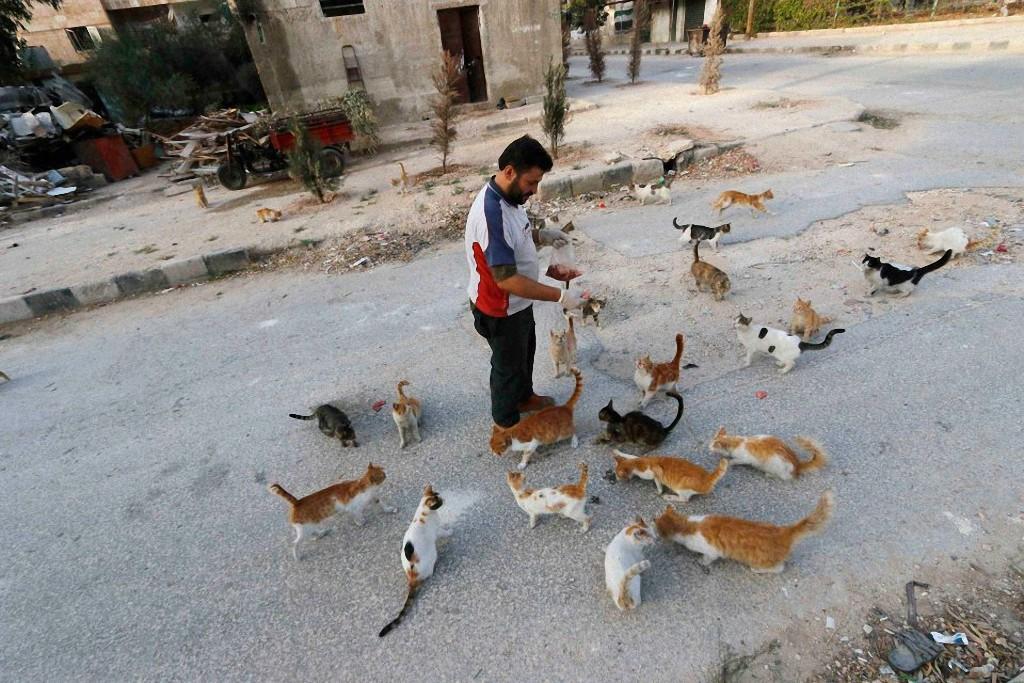 Группировка «Исламское государство» запретила вМосуле котов
