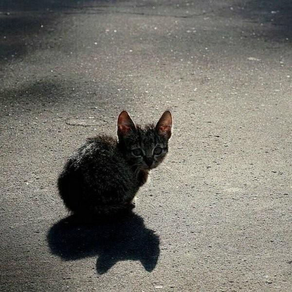 Уфимцы посоветовали поставить монумент безжалостно убитому коту