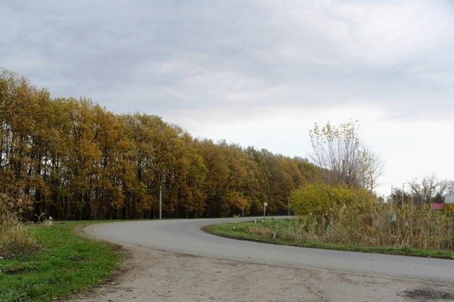ВПушкинском районе Петербурга найдено тело женщины