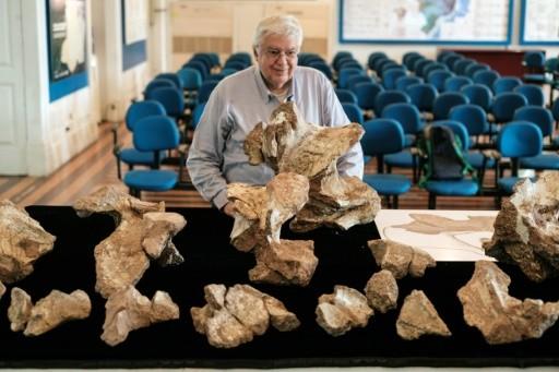ВБразилии найден самый крупный динозавр вшкафу