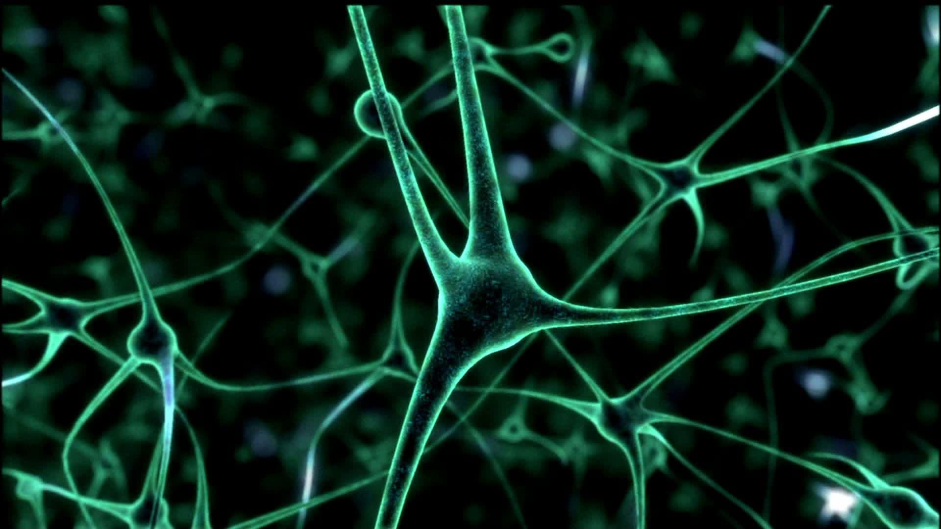Ученые выращивают человеческий мозг влаборатории
