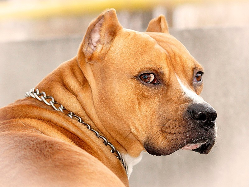 Гражданин Башкирии восемь лет насиловал свою собаку