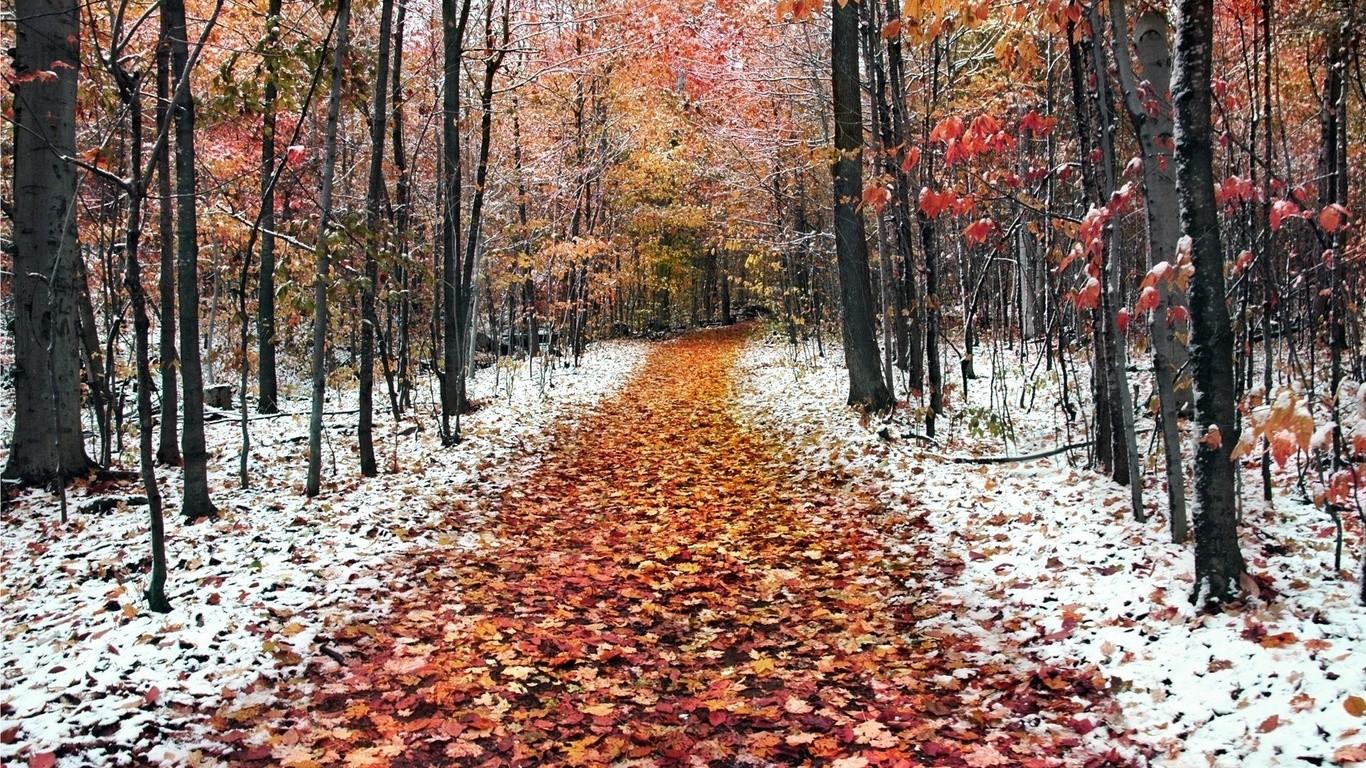 Петербургу обещали 1-ый снег наследующей неделе