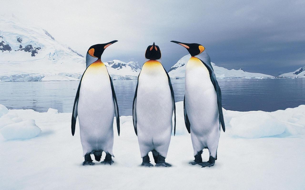 Ученые узнали, почему пингвины нелетают