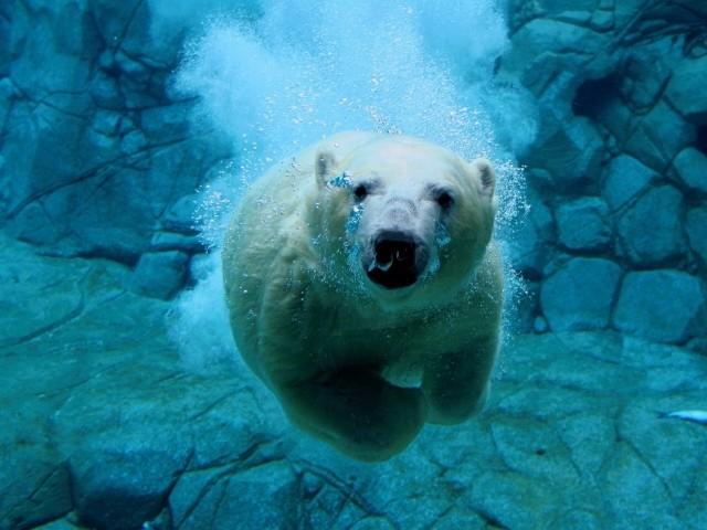 Ученые предлагают сделать вАрктике природоохранные зоны