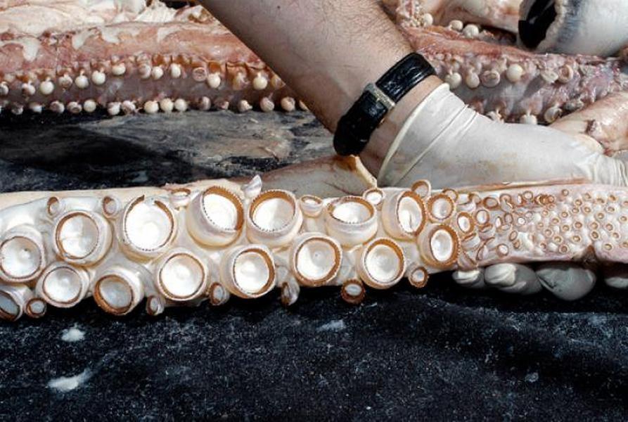Наберегу моря вИспании отыскали мертвого гигантского кальмара