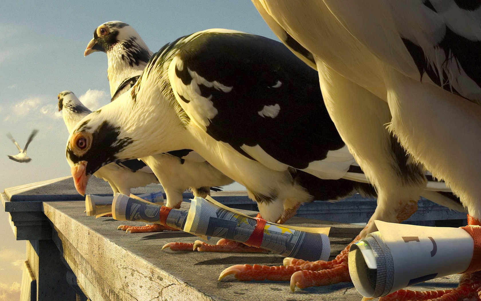 ВИндии расследуют дело о вероятном шпионаже сучастием почтовых голубей