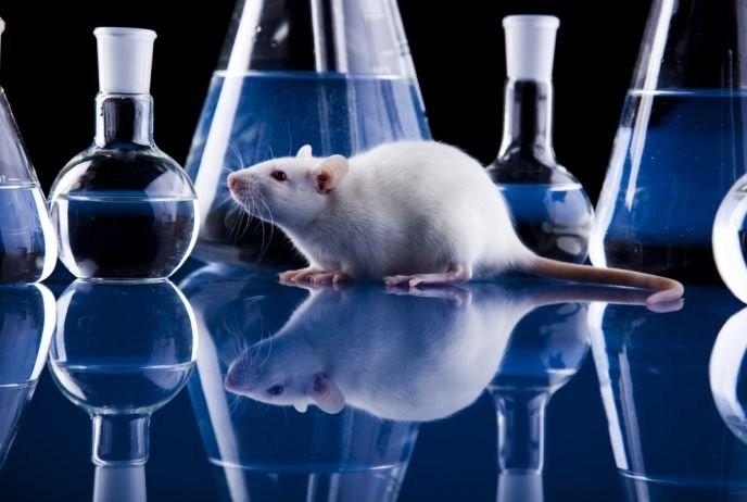 Живых мышей научились делать избесформенной клеточной массы