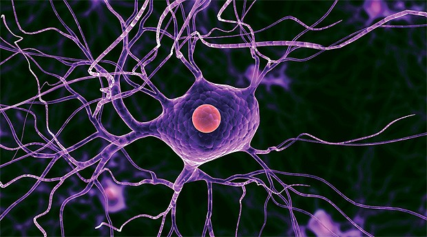 Запущен проект посозданию атласа клеток человека