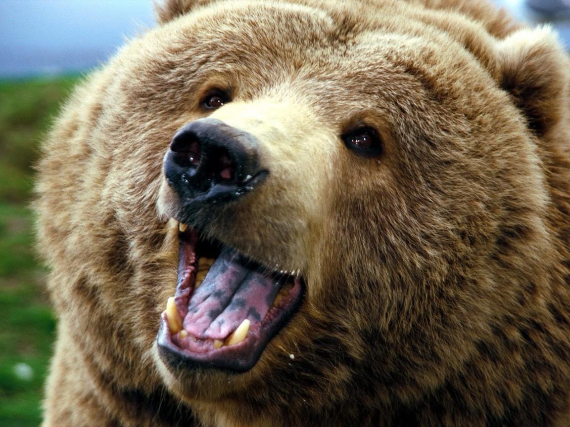 В РФ медведь напал намужчину ирастерзал его