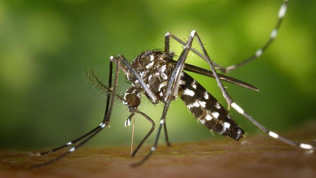 ВБритании впервый раз обнаружили яйца комаров, передающих вирус Зика