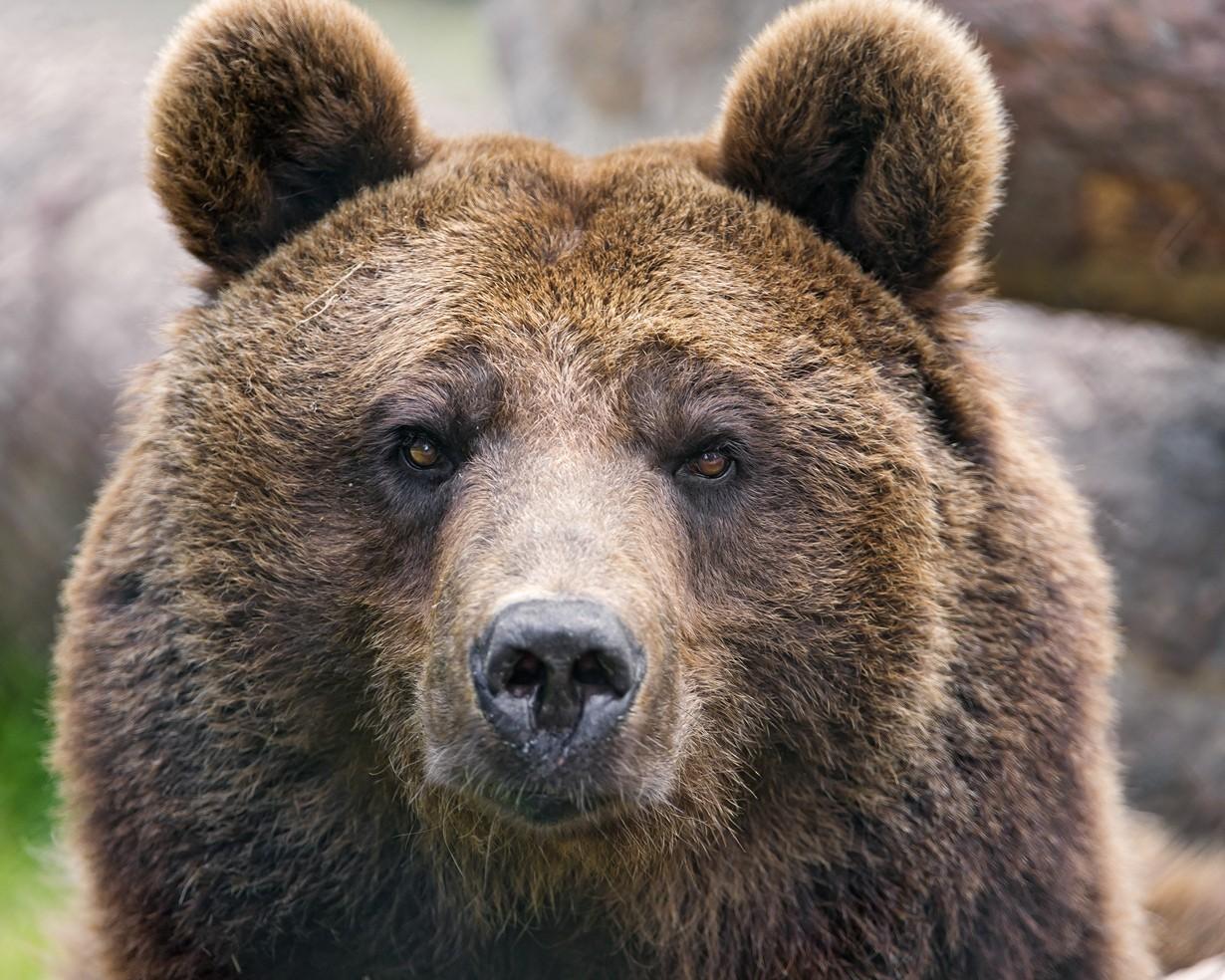 Медведя выгуливали надетской площадке вНовосибирске