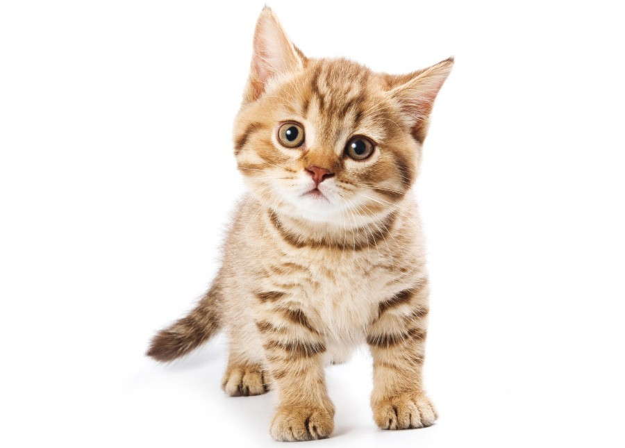 Насеверо-востоке столицы мужчина умер, спасая отсмерти котенка