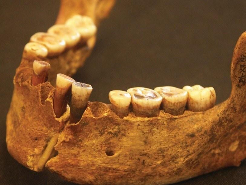Праворукость появилась упредков человека еще 1,8 млн лет назад— Ученые