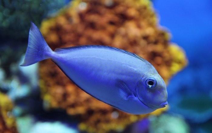 Инстинкты рыб нарушаются из-за изменения климата