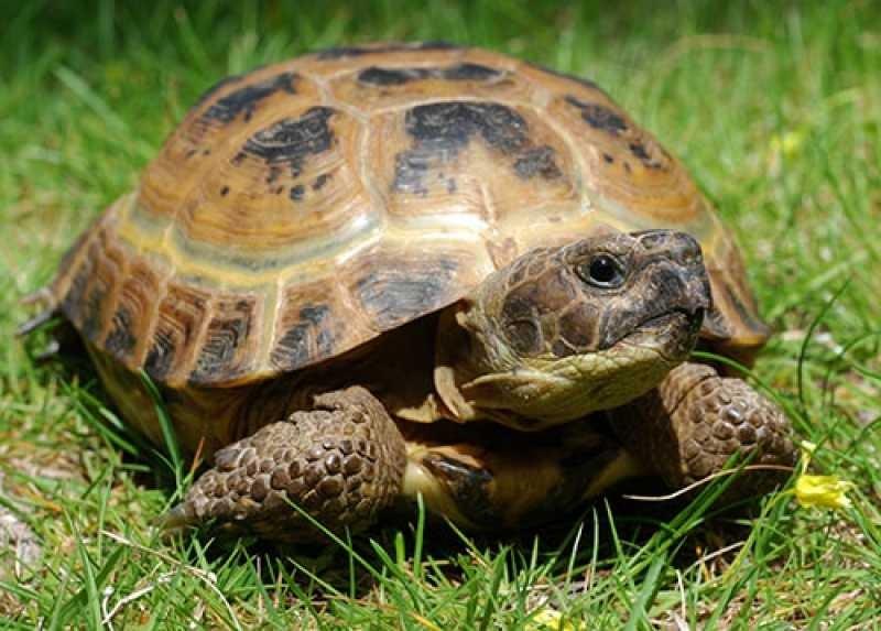 Профессионалы доказали, что черепахи всостоянии обучаться