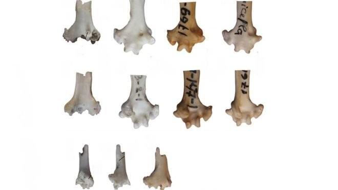 НаБайкале отыскали кость старинного попугая