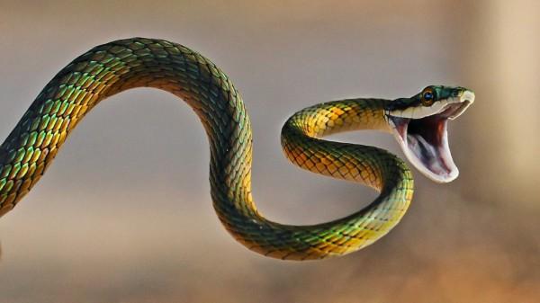 Ученые назвали десять животных, обладающих удивительными способностями