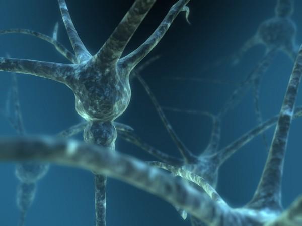Ученые обнаружили белок, предотвращающий размножение вирусов в организме