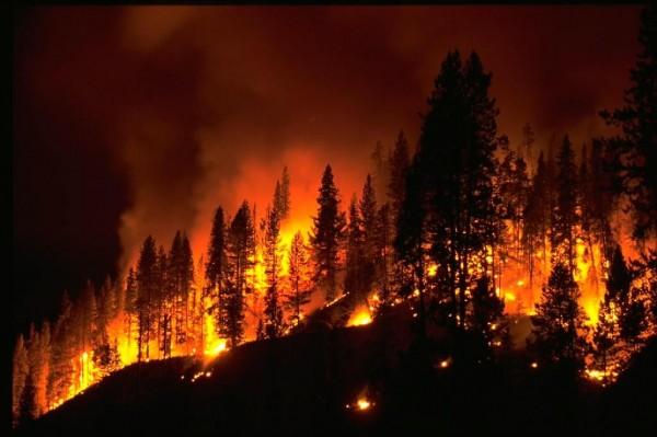 Ученые рассказали об особенностях лесных пожаров