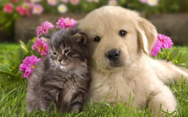 Ученые выяснили, почему человек приходит в восторг от милых животных и предметов