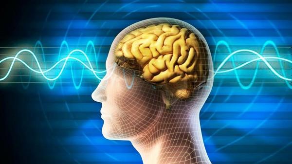 Ученые создали нейрочип для фиксирования активности головного мозга