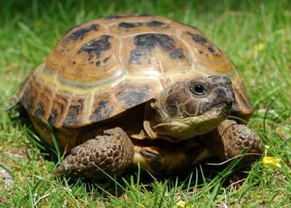 Ученые доказали, что черепахи способны обучаться