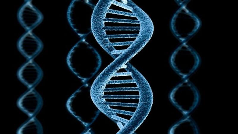 Биологи раскрыли механизм копирования первых молекул РНК вживых организмах