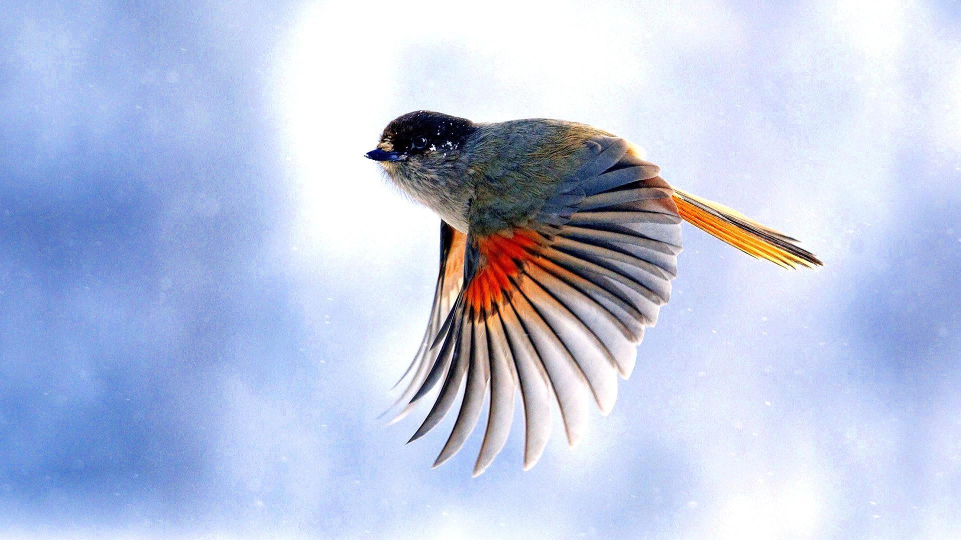 Птицы сбольшим мозгом имеют больше шансов выжить наохоте— Ученые
