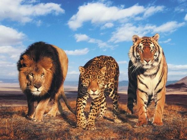 В смерти половины животных дикой природы виновен человек— Ученые