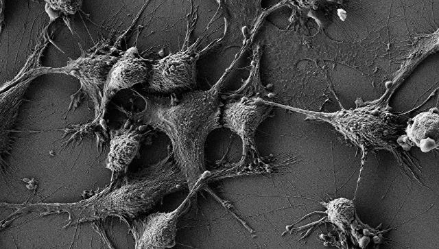 Ученые из Российской Федерации открыли наночастицы, защищающие тело отрадиации