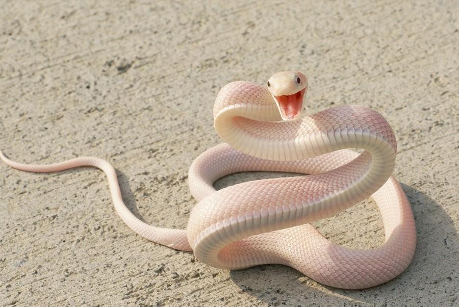 Зрение людей приспособлено лучше подмечать змей, чем остальных животных— Ученые