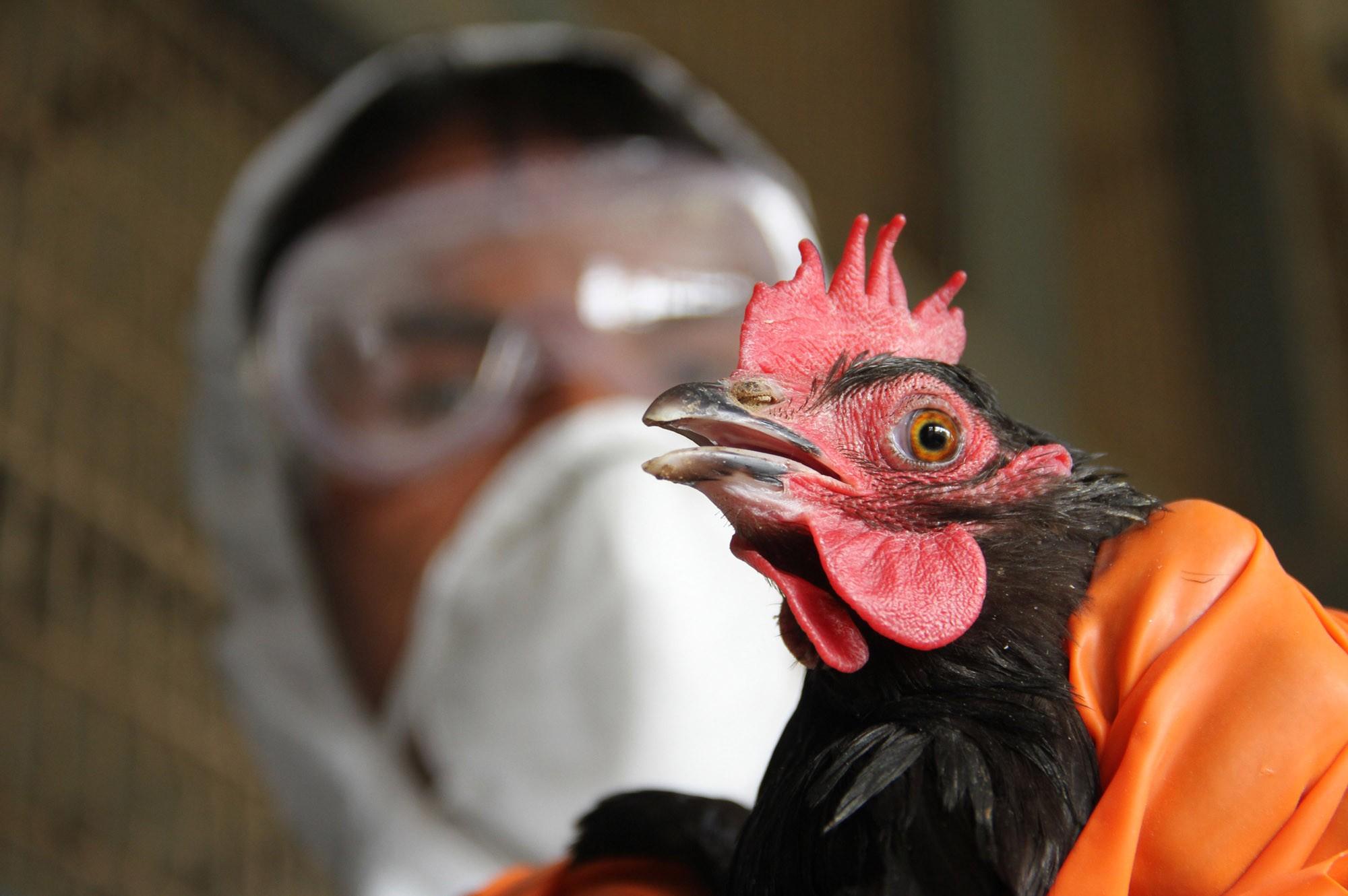 Вевропейских странах зафиксирована вспышка птичьего гриппа