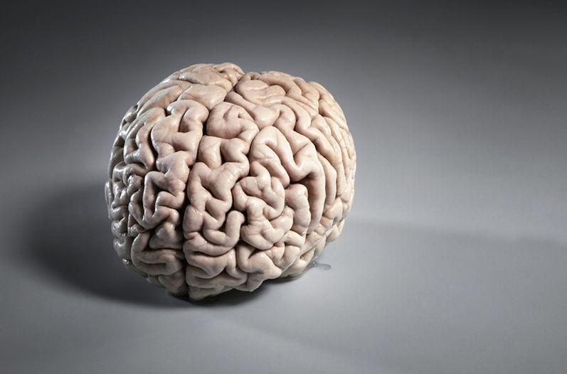 Мужской мозг неспособен намногозадачность— Ученые