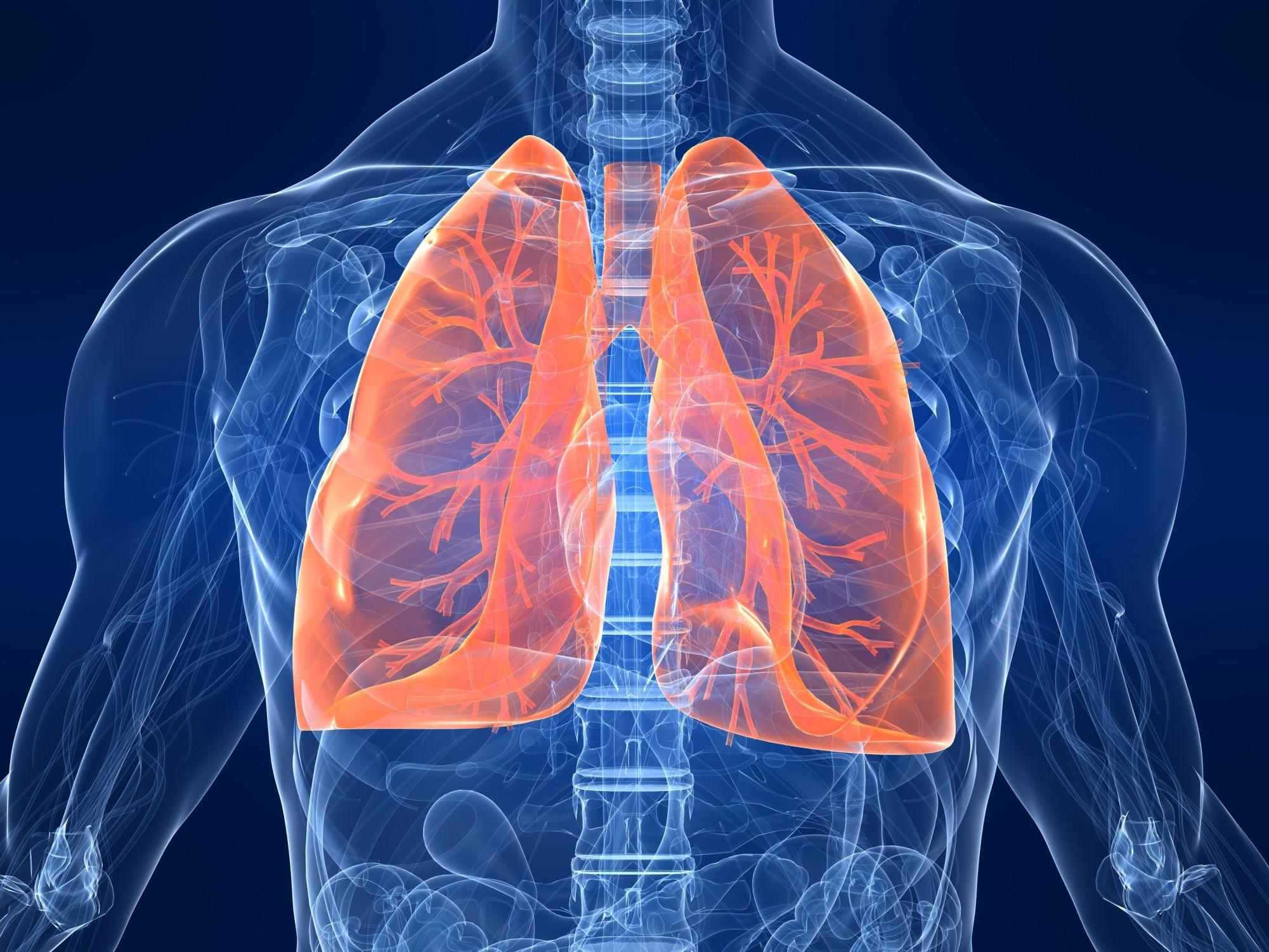 Ученые создали человеческое легкое спомощью тканевой инженерии