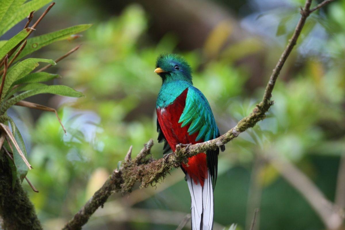 Установлен цвет птиц, живших вэпоху динозавров— Ученые