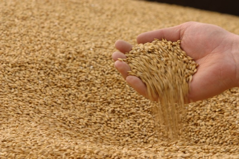 Минсельхоз призвал разобраться слогистикой нарынке зерна