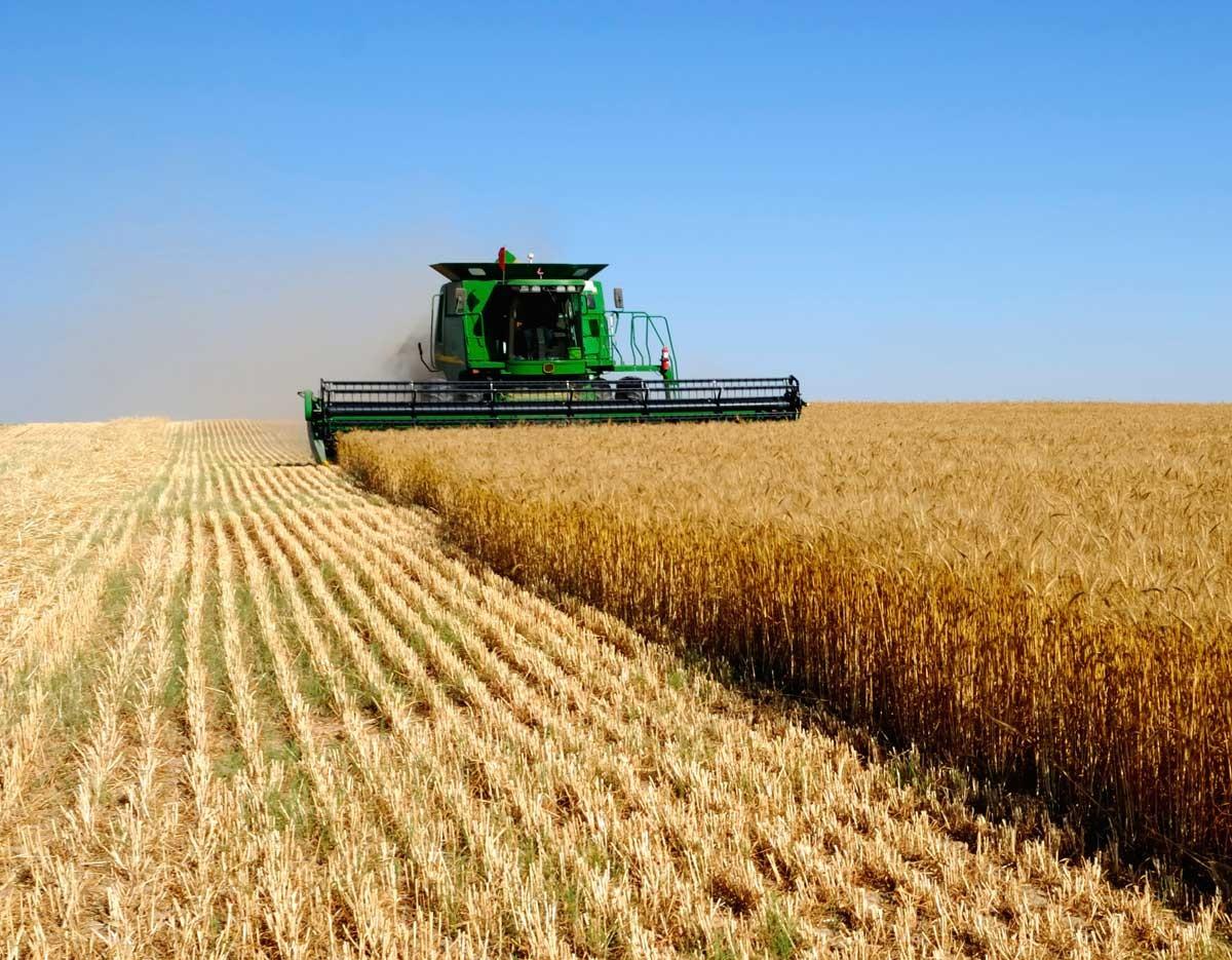 Бангладеш будет покупать российское зерно