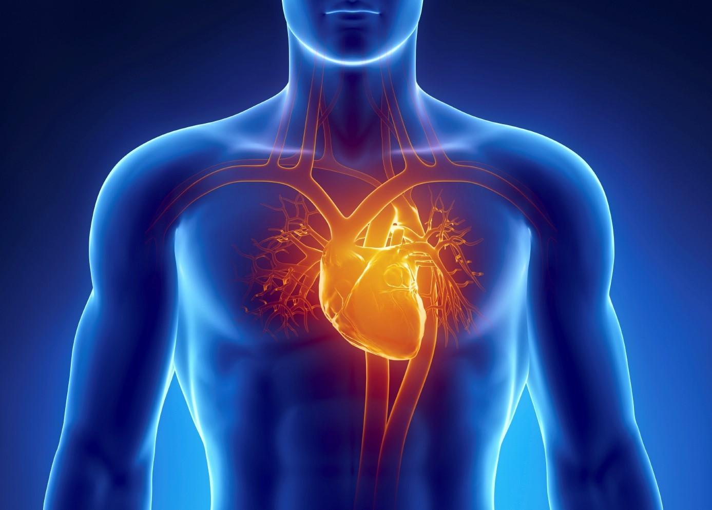 Где у женщин находится сердце