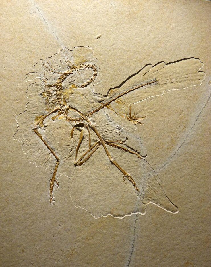 Древнейшие птицы обладали кератиновым клювом— Ученые