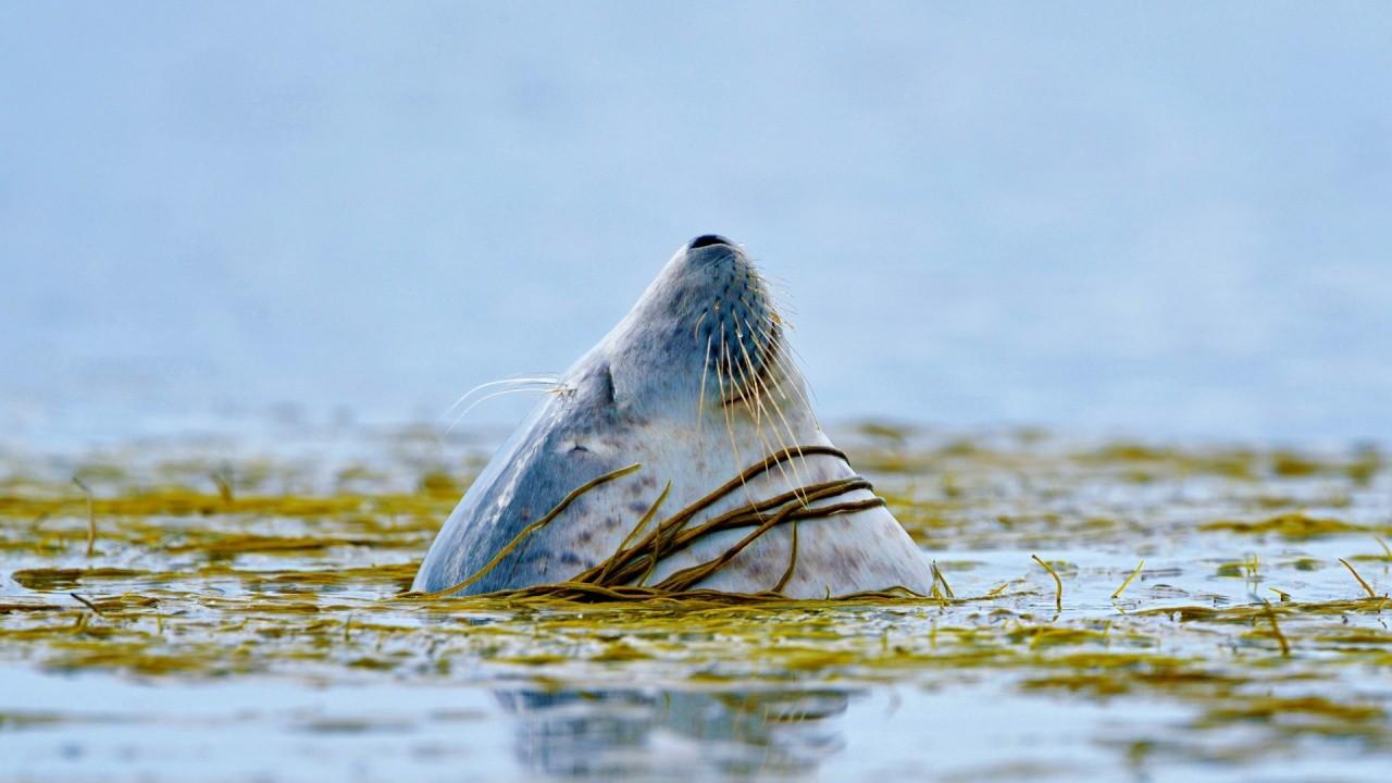 GPS помогла выяснить вероятную причину смерти тюленей вШотландии
