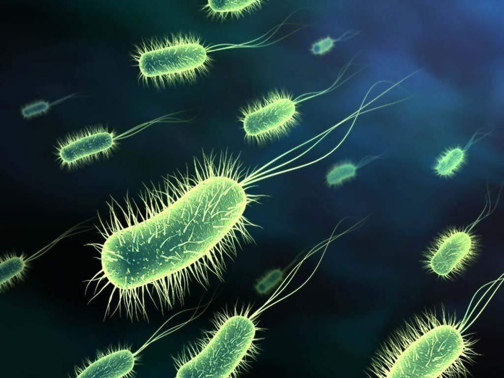 Ученые обнаружили древнейшие окаменелости громадных бактерий