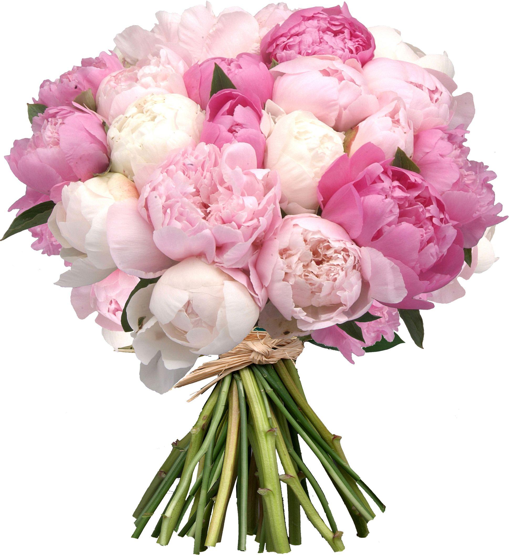 Приятно бог, картинки букеты пионовых роз на белом фоне