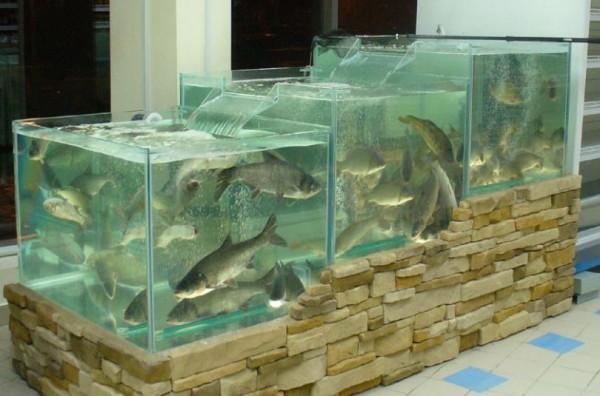 Ученые: Регулярное употребление рыбы предотвращает аллергию у детей