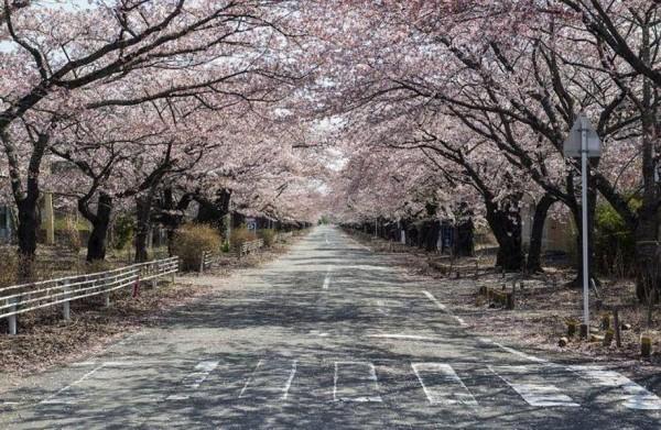 В сети показали, как выглядит Фукусима через 5,5 лет после аварии