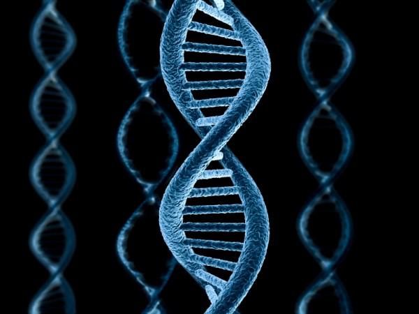 Московские ученые исследовали способы упаковки ДНК в клеточном ядре